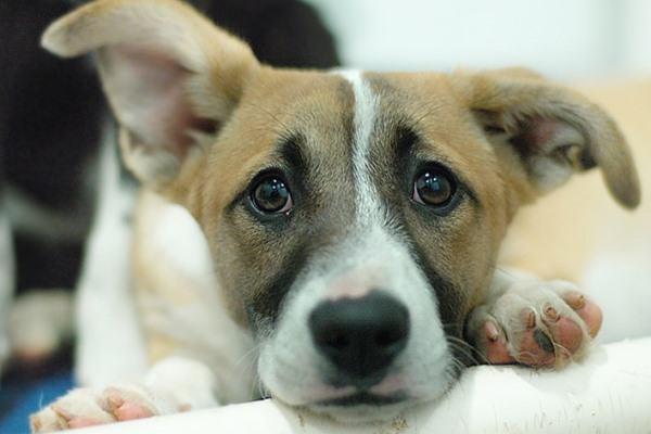 CCZ confirma mais 18 casos de leishmaniose visceral canina em Presidente Prudente