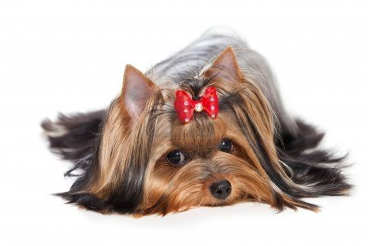 Saiba como proteger seu cão contra a leishmaniose visceral