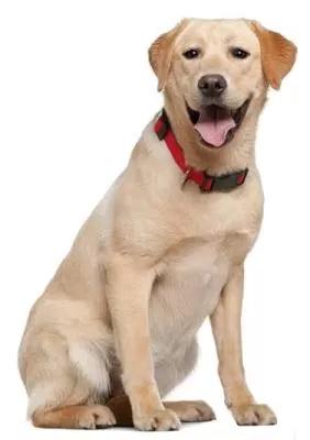 Centro de Controle de Zoonoses faz plantão para realizar exames de leishmaniose em cães