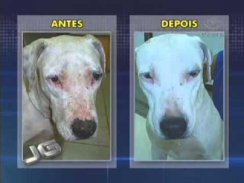 Cães com Leishmaniose ganham direito a tratamento
