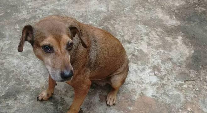 TJ-SP proíbe eutanásia de cachorro diagnosticado com Leishmaniose