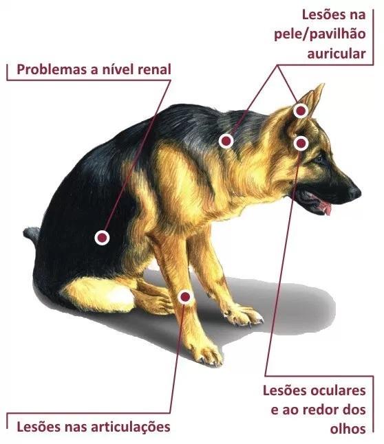 Inquérito apura eventual omissão de 14 proprietários de cães diagnosticados com leishmaniose