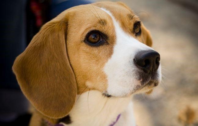125 cães são diagnosticados com leishmaniose e 69 são eutanasiados em Florianópolis