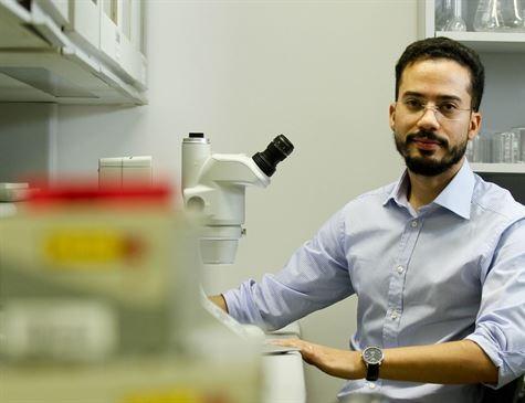 Controle do parasita do gênero Leishmania é desafiador