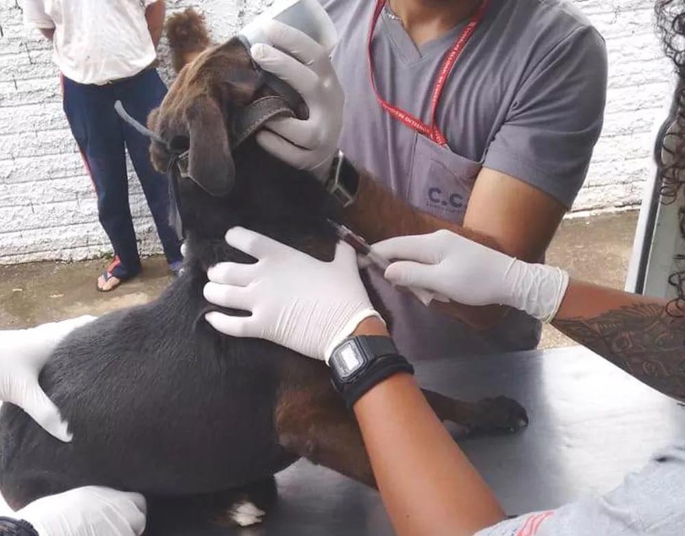 Bairro João Domingos Netto recebe mutirão de coleta de sangue em cães para exames de leishmaniose
